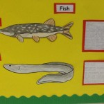 Some work done by Josh, Karl, Kyle and Scott on the fish found in the canal.